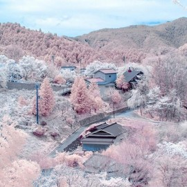 nagano Japan - snow and cherry blossom