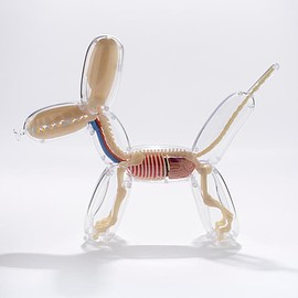 Jason Freeny - Anatomy Balloon Dog