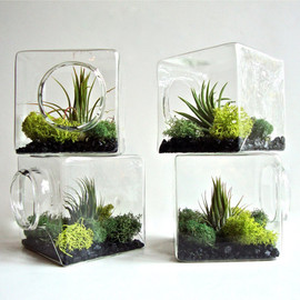 eGardenStudio - Stackable Living Eco Cube / Modern Air Plant Glass Terrarium Cube
