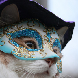 karlaspence35 - The Masked Kitty