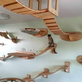Cat Playroom