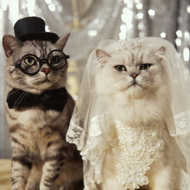 wedding cats