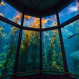 California USA - Monterey Bay Aquarium