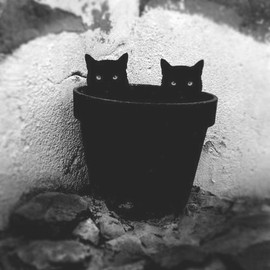 Grow a cat.....or two