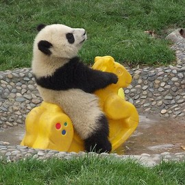 Panda at the playground.
