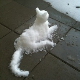 Snow Cat/sooo cute!