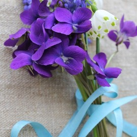 Posy of violets, grape hyacinth and snowdrops