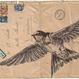 Mark Powell - Birds Illustrated on Vintage Envelopes