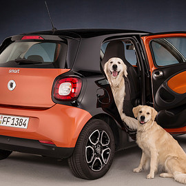 smart - for four, smart for dogs