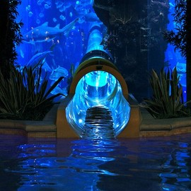 Las Vegas, US - Water Slide through Shark Tank