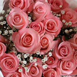 Flowers - Pink,Pink,Roses♡