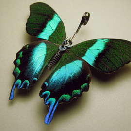 Mike Libby(Insect Lab) - Papilionidae: Papilio Blumei