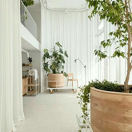Plant Decoration - Living Room
