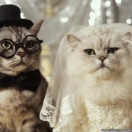 Fine Art America - WEdding cat Photograph