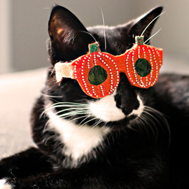 NotsoKittyShop - Pumpkin-Shaped Cat Glasses / Halloween glasses for cats