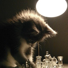 cat - kittens playing chess