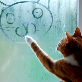 Cat Drawing on Window