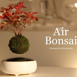 Air Bonsai - Air Bonsai