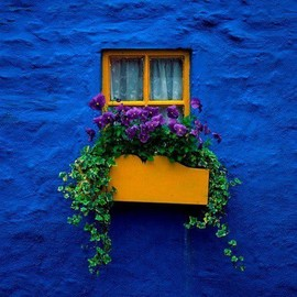 blue wall/flowers.