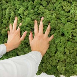 Evergreen by Freund - Mounted Moss Panel