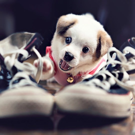 The Cutest Little Puppy in the World