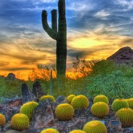 Sonoran Desert, Scottsdale Arizona - Sunset & Barrel Cactus