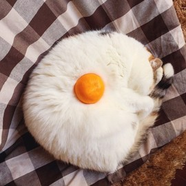 Kitty wanted to be a fried egg.