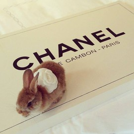 chanel - Unknown