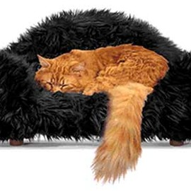 Cat SofaBeds