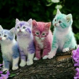 Colorful Cats!