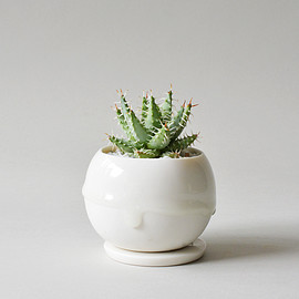 TOKY - Drop Bowl Pot S (White) + Aloe erinacea