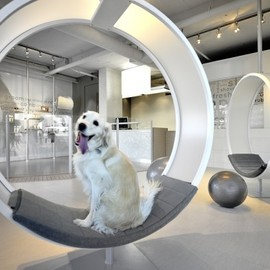 Square One Interiors - Unleashed Dog Spa grooming area interior design