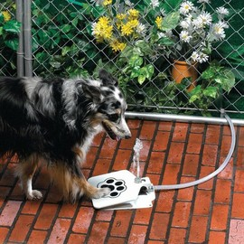 DoggieFountain.com - Doggie Fountain