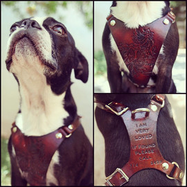 Exsect - Leather Dog Harness