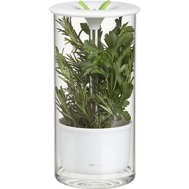 Crate & Barrel - Glass Herb Keeper