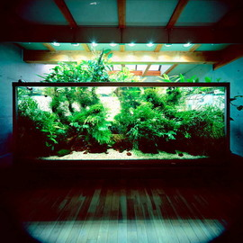 Takashi Amano - Nature Aquarium
