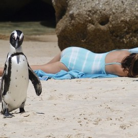 South Africa - Boulders Beach