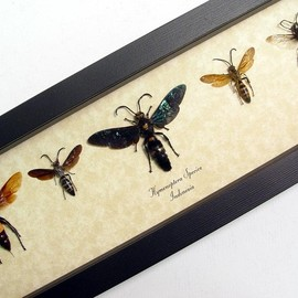 Real Framed Exotic Wasp Bee Collection 8000