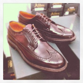 ALDEN - long wing shell cordovan color 8
