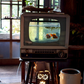 Put a fish in your TV