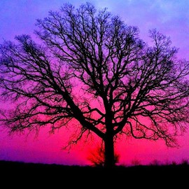 sunset & tree