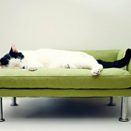 ModPet - Modern Pet Bed - chaise lounge chair