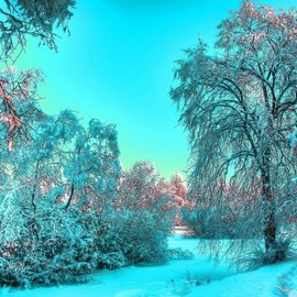 * - Frozen, Landscape, Snow, Forest