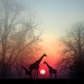 Photograph Giraffe by Perri Kardashian on 500px