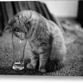 Fine Art America - Betty The Cat Acrylic Print By Randall Arthur