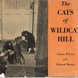 Edward Weston - The Cats of Wildcat Hill