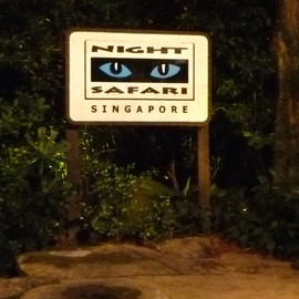 Singapore - Night Safari