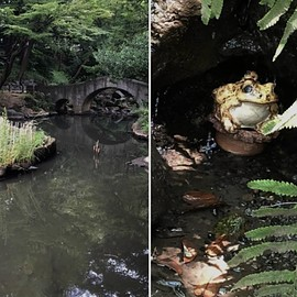 Ours - The Thief who stole My Frogs from the Arisugawa Park in October 2019