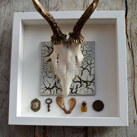Handmade, Mounted Roe Deer Skull & Antlers Shabby Chic wall decor Taxidermy Art, Steam Punk