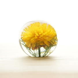 Landscape Products - Hafod Grange - Paperweight S #yellow helichrysum